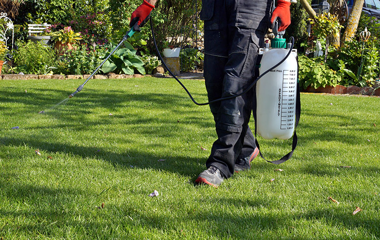 best strong weed killer