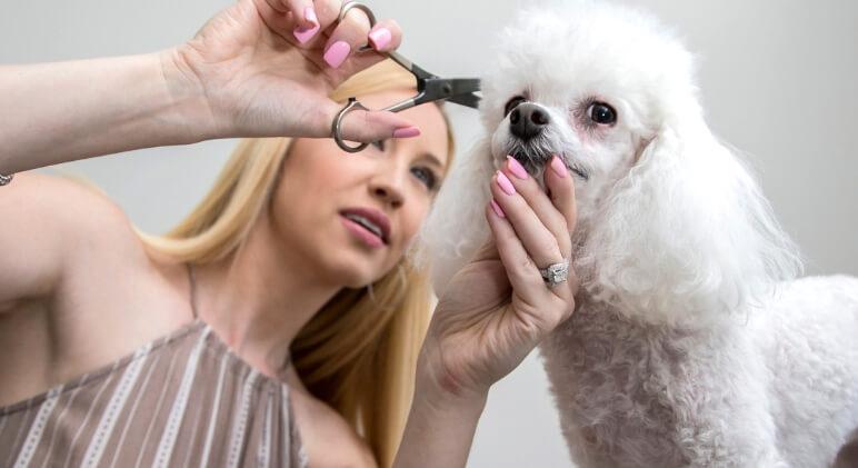 Mobile dog grooming miami